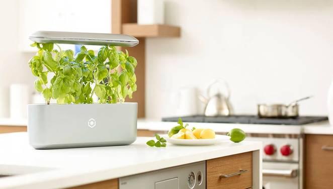 Khám phá máy trồng rau sạch thông minh