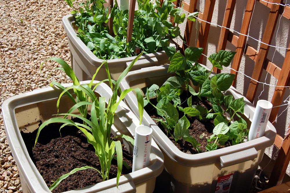 Mẹo hay trồng rau sạch trong thùng xốp cực kỳ hiệu quả