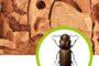 Mẹo sử dụng đồ gỗ tránh mối mọt