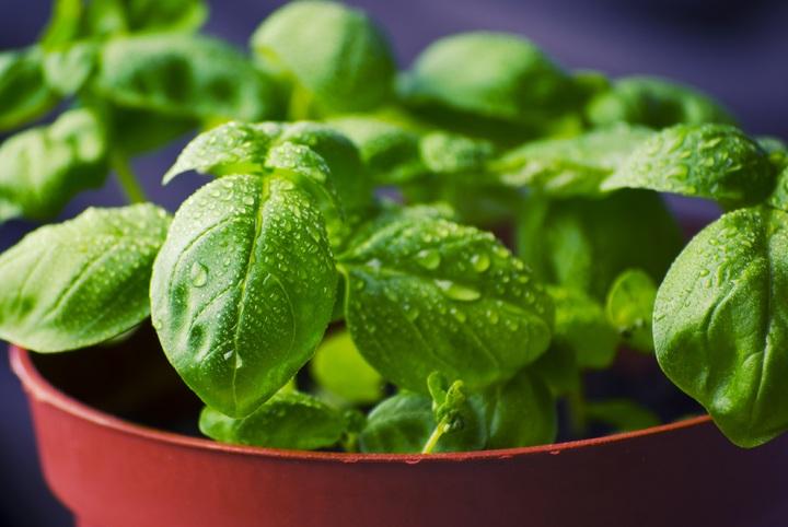 Học ngay các bước trồng rau hữu tại nhà đảm bảo an toàn