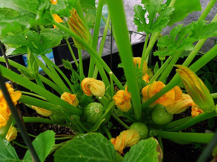 Học ngay các bước trồng rau hữu cơ tại nhà đảm bảo an toàn