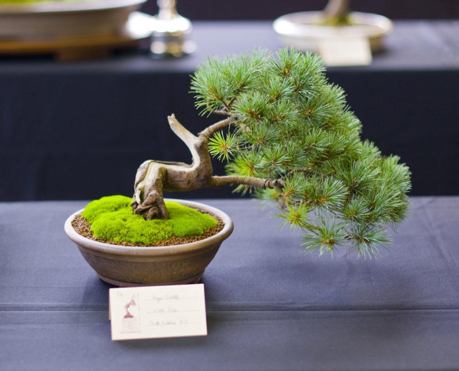 Khám phá 4 loại cây cảnh để bàn vừa đẹp lại dễ chăm sóc