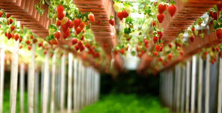 Tuyệt chiêu chăm sóc cây ăn quả mùa mưa