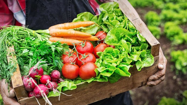 Bật mí cách phân biệt rau sạch và rau hữu cơ