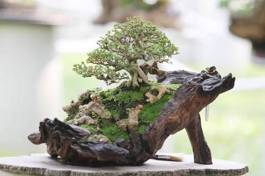 Khám phá bố cục chậu bonsai đẹp tỷ lệ đủ tiêu chuẩn
