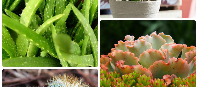 Mách bạn cách chọn các loại cây phong thủy