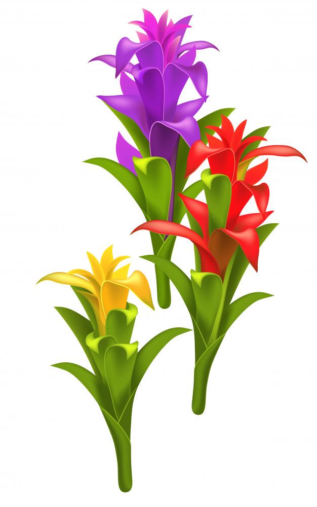Học cách trồng cây phong lộc hoa hút tài lộc đón năm mới