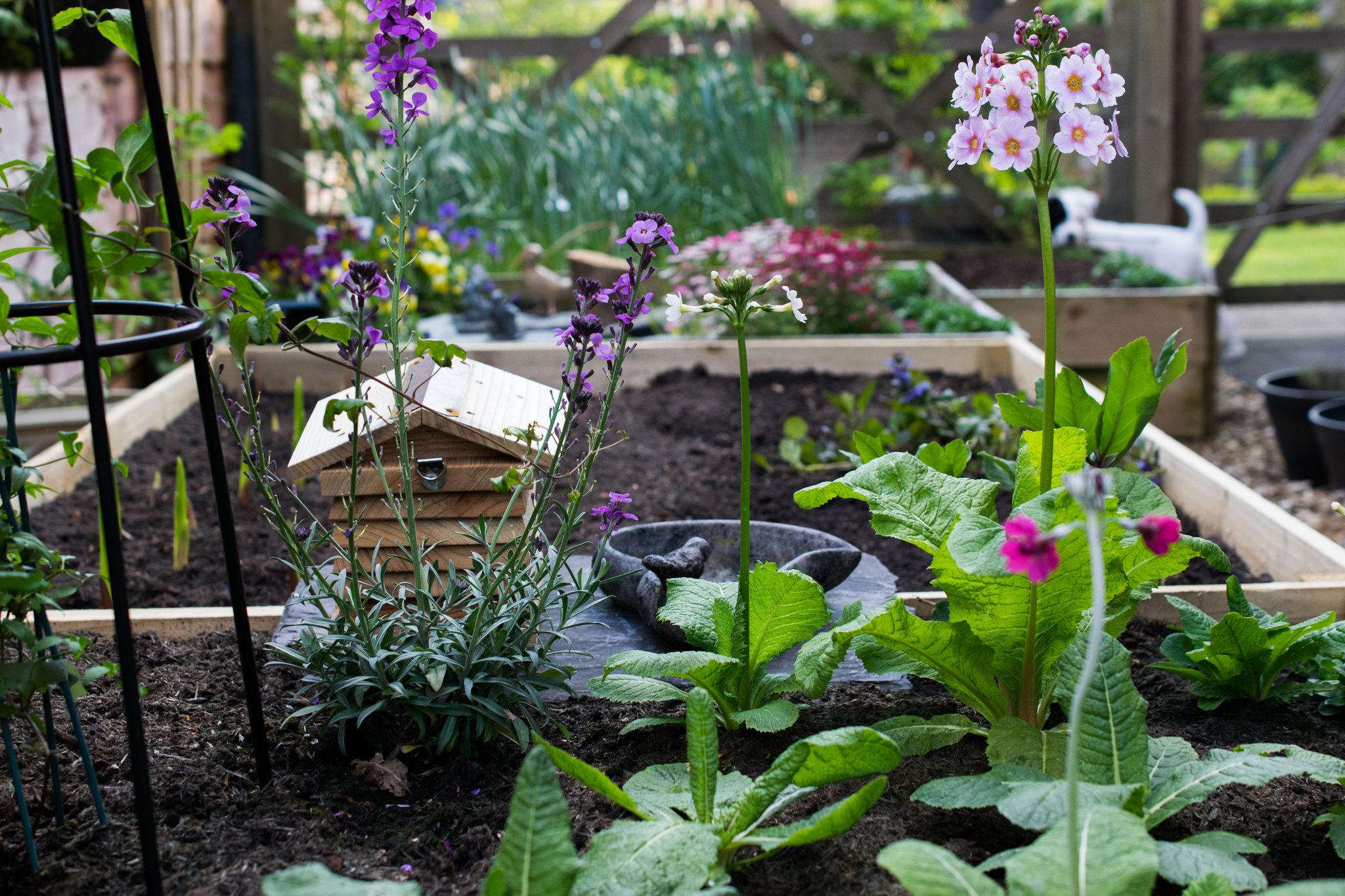 Điểm danh các loại rau ngày tết dễ trồng
