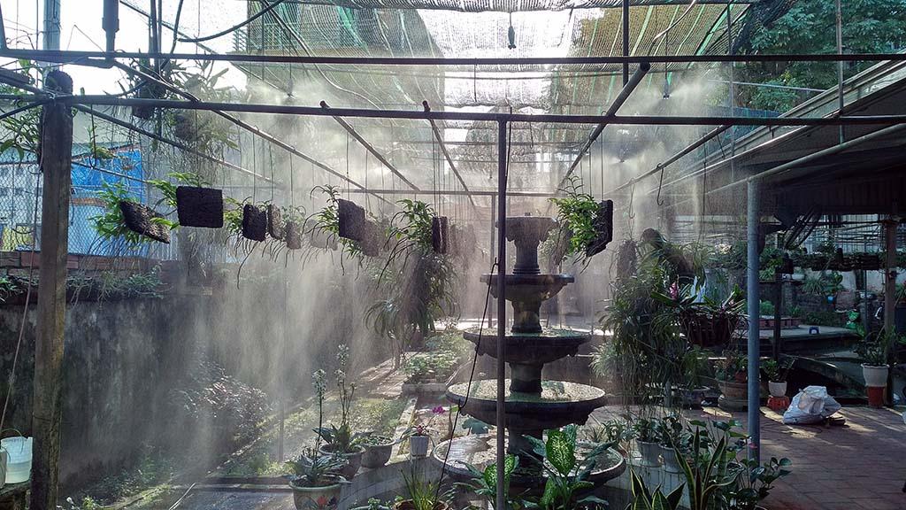Hệ thống tưới phun sương được lắp đặt tại vườn phong lan