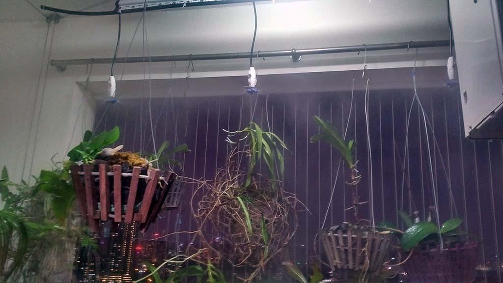Hệ thống tưới phun sương trên ban công chung cư booyoung
