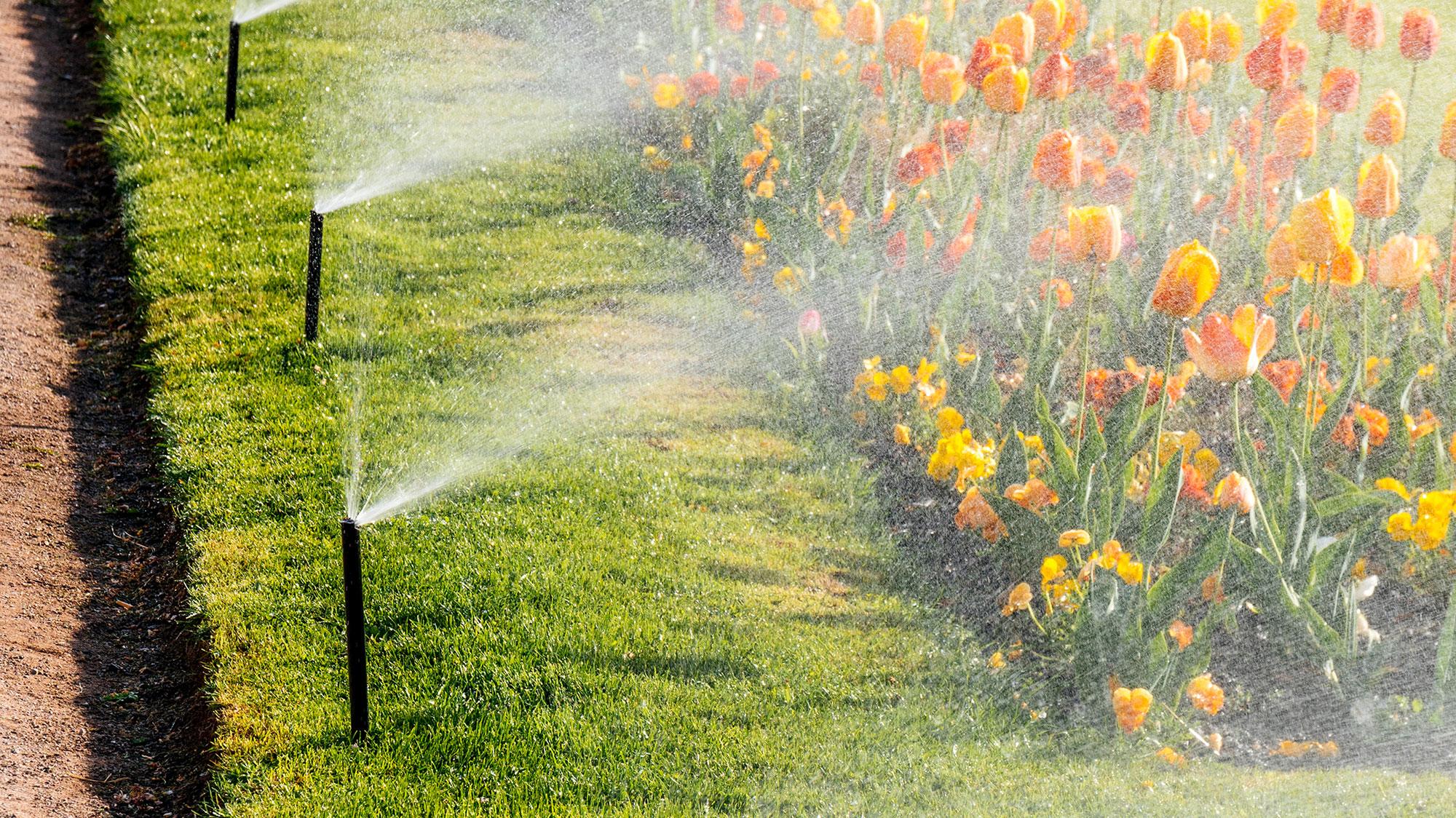 Nguyên lý hoạt động của hệ thống tưới phun mưa