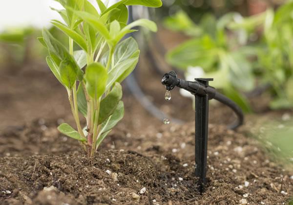 Bảo trì hệ thống tưới nhỏ giọt duy trì quá trình sử dụng