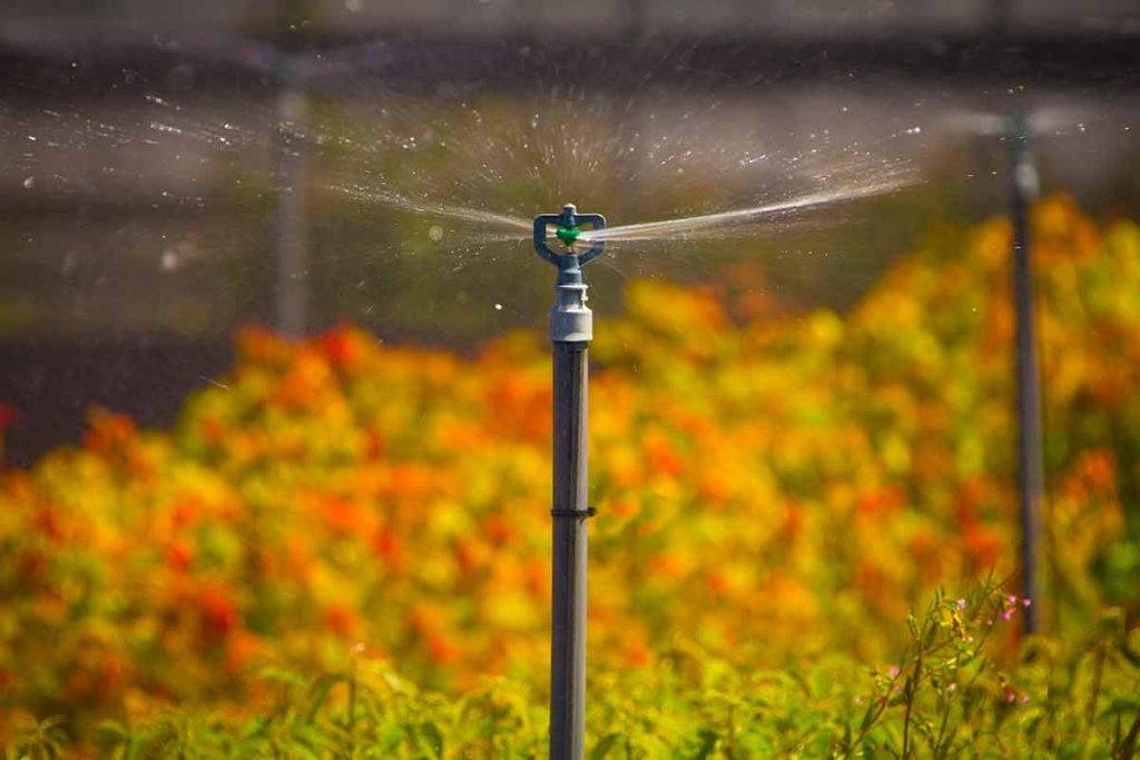 Tầm quan trọng của thiết bị lọc trong hệ thống tưới cây tự động