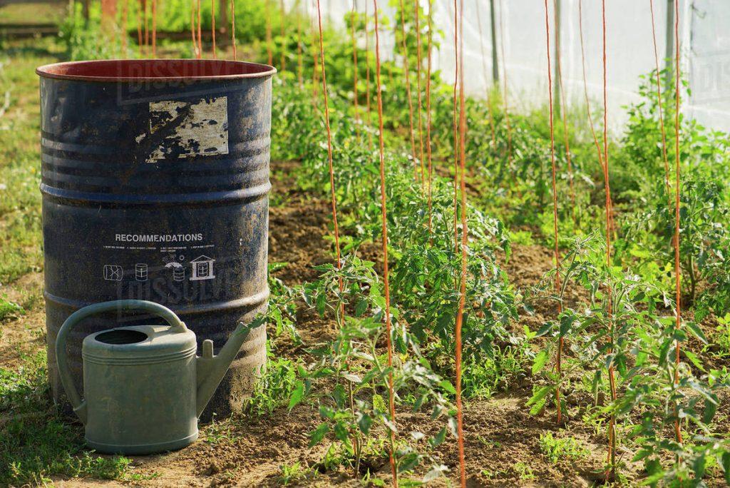 Độ ẩm liên tục được kiểm soát kích thích tăng trưởng cho cây