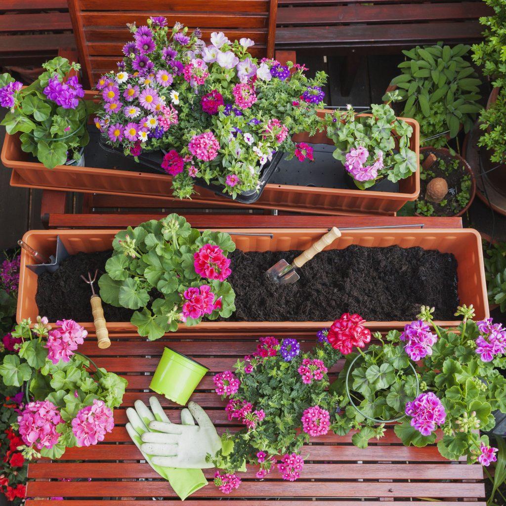 Cây trồng trong nhà kính được trồng bằng những loại đất chuyên dụng không chưa mầm bệnh hoặc vi khuẩn gây hại