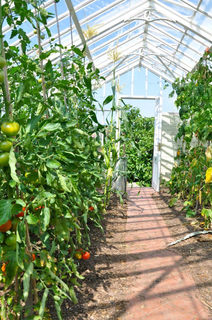 Nhà kính cung cấp một môi trường nhiệt độ có kiểm soát và không khí được đối lưu tốt, thích hợp cho cây trồng phát triển.