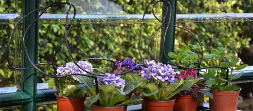 Cách lắp đặt thiết bị tưới nhỏ giọt cho cây trồng chậu ban công rực rỡ sắc hoa