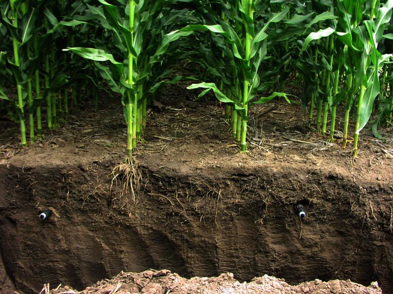 Nước ngầm nhỏ giọt (SDI) áp dụng nước dưới bề mặt đất, trực tiếp đến vùng gốc của cây trồng.
