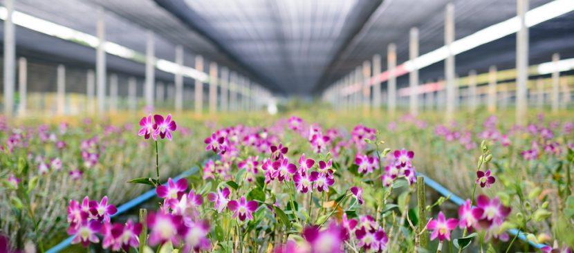 Một số lý do bạn nên chọn hệ thống tưới phun sương cho vườn lan phát triển tốt