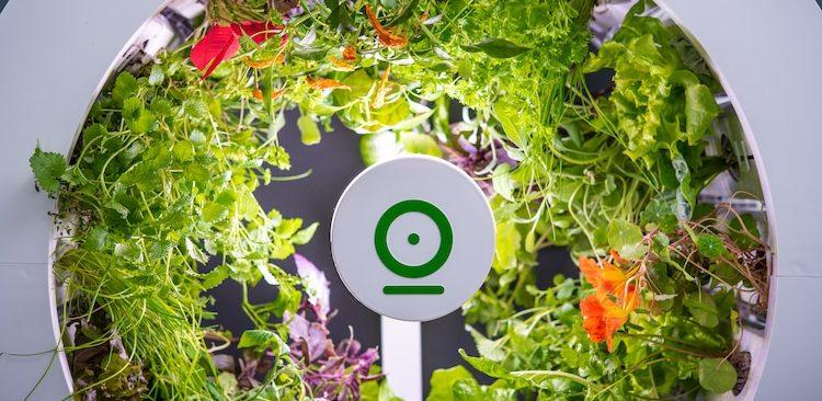Bất ngờ với mô hình hệ thống trồng rau trong nhà thông minh