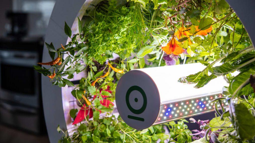 Khu vườn thông minh trồng rau sạch trong nhà kết hợp hệ thống tưới tự động và đèn Led