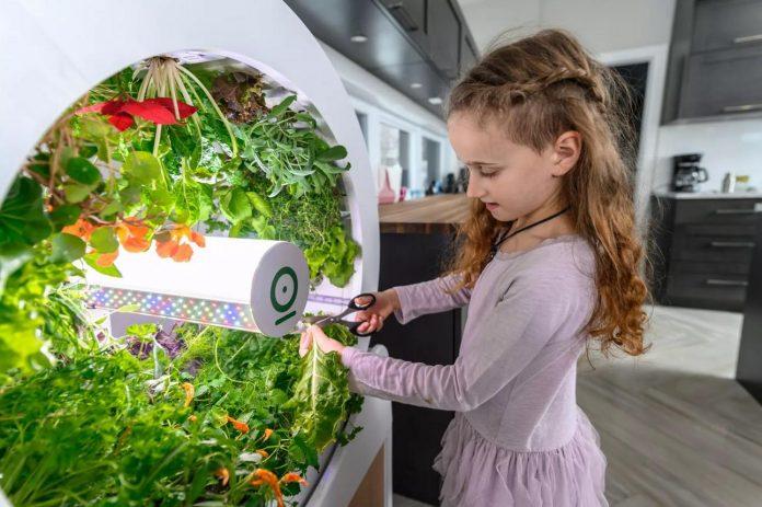 Mô hình trồng rau sạch thông minh với hệ thống tự tưới nước và đèn Led tự động