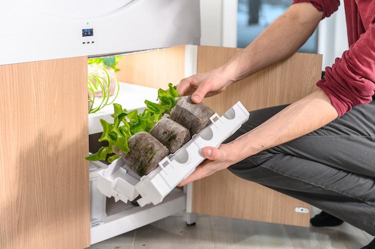 Công nghệ trồng rau sạch thông minh hiện đại kết hợp hệ thống tưới tự động