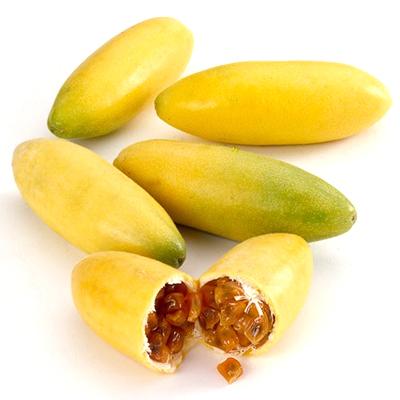 Trước khi gieo hạt giống bạn nên ngâm chúng vào trong nước ấm trong khoảng thời gian 1-2 ngày trước khi đem chúng đi gieo. Để lớp vỏ cứng mềm dần, dễ nứt nanh