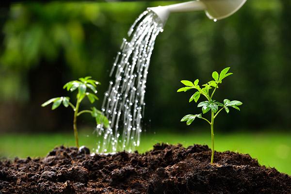 Hướng dẫn chăm sóc hạt giống theo từng giai đoạn xuất hiện lá