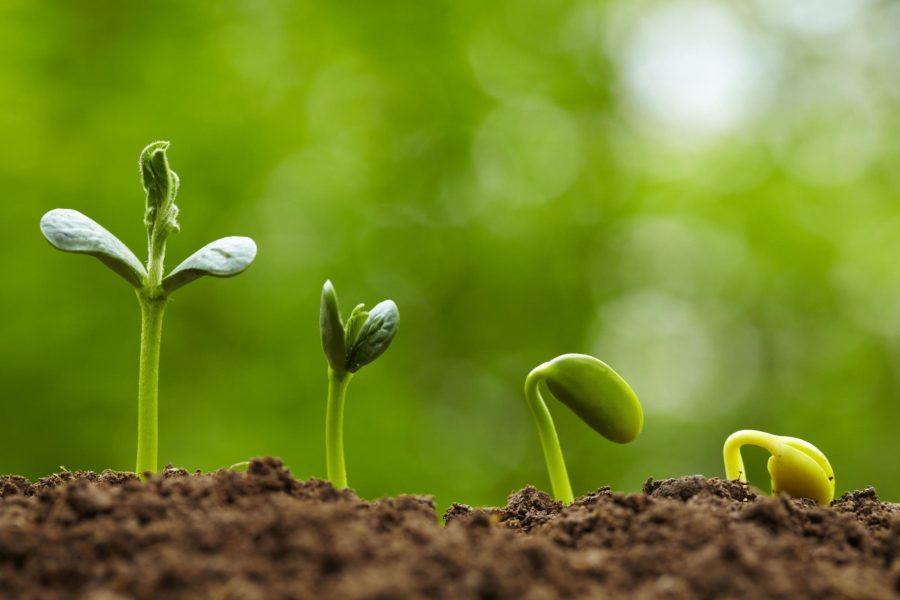 Giải pháp gieo trồng hạt giống hiệu quả theo từng giai đoạn