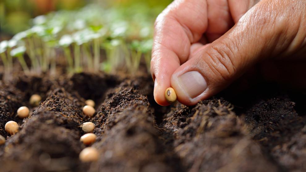 Tại sao hạt giống không nảy mầm và cách khắc phục