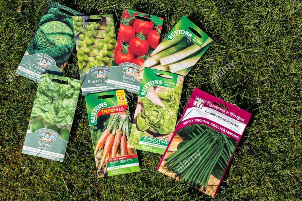 Hạt nảy mầm và mầm bị chết do bị nhiễm nấm, khuẩn từ đất ươm. Hạt có thể bị côn trùng cắn.
