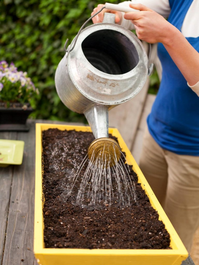 Tưới nước quá nhiều sẽ làm ngập, đất sũng quá ẩm khiến cho nấm mốc phát triển, ngăn hạt giống thở gây thối hạt