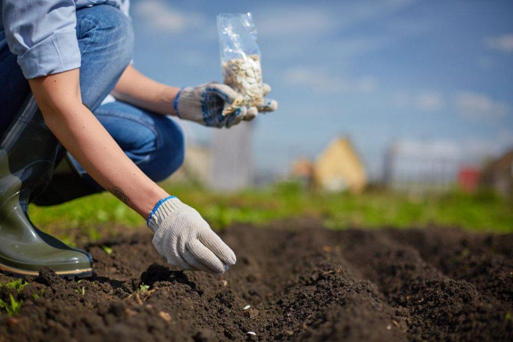 Nhiệt độ quá cao, quá thấp cũng sẽ ảnh hưởng đến độ nảy mầm của hạt.