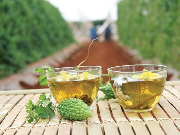 Hoa, quả, thân, lá có thể dùng làm trà khổ qua rừng, trà khổ qua rừng túi lọc hoặc viên uống khổ qua rừng.