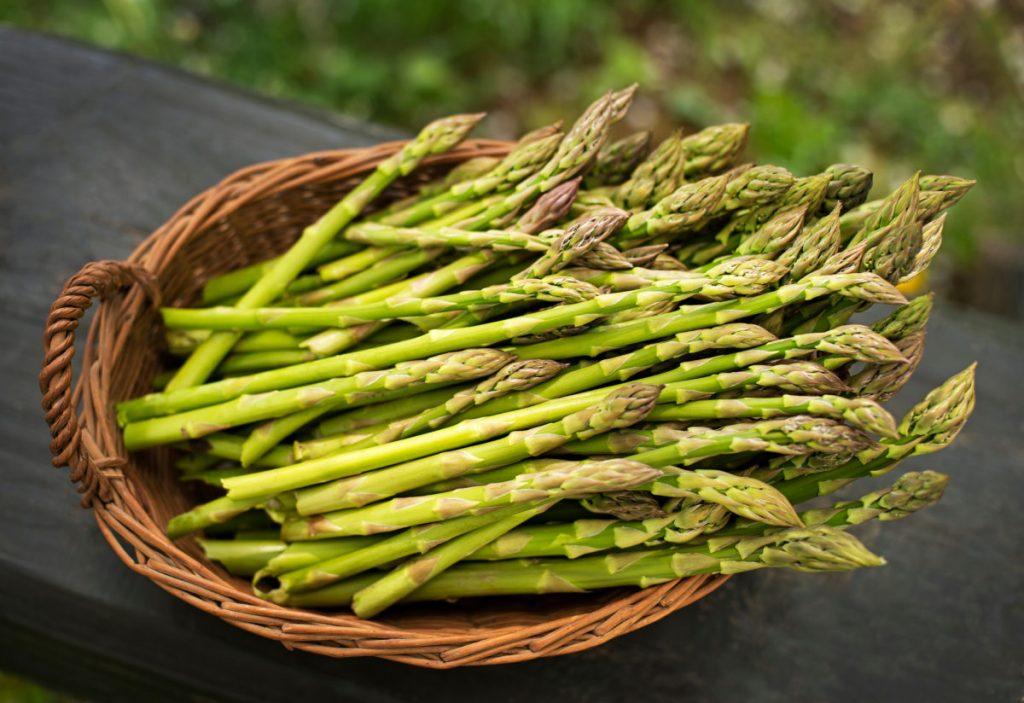 Trồng măng tây đơn giản tại nhà đem lại chất dinh dưỡng cao