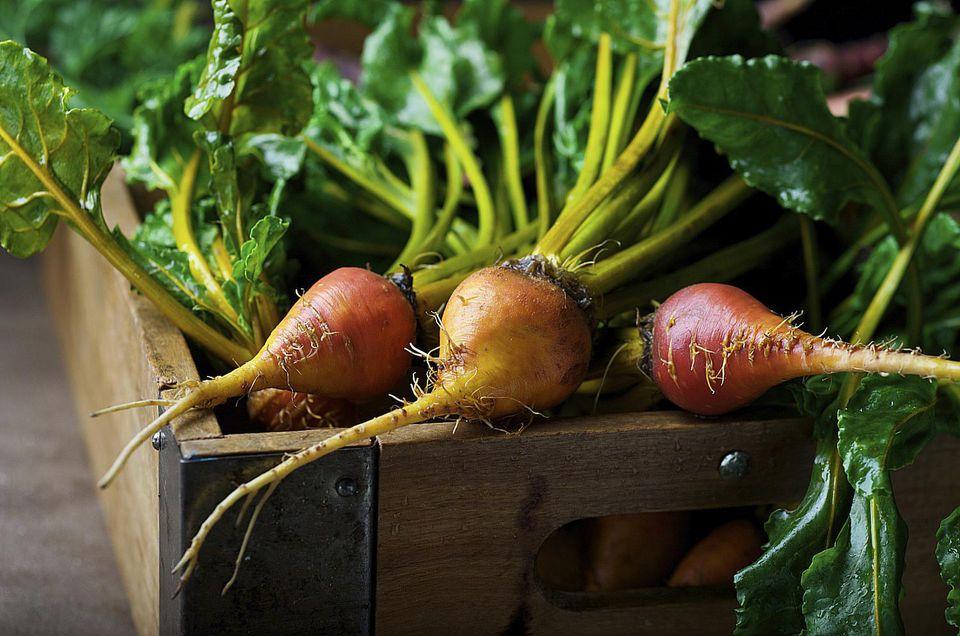 Củ cải đều có rễ và củ nằm dưới đất do vậy cần phải trồng trên đất tơi xốp, giàu dinh dưỡng và thoát nước tốt.