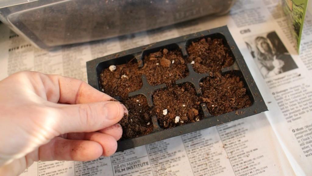 Gieo hạt mỏng đều lên bề mặt vào từng ô của khay ươm ( có thể gieo vài hạt trực tiếp vào chậu).
