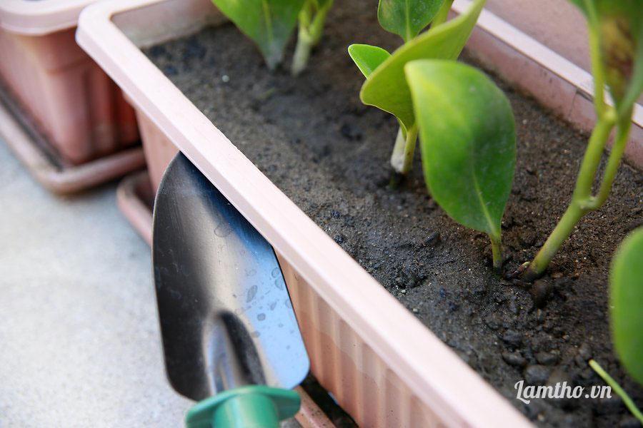 Bí quyết hồi sinh cây trồng ngập nước