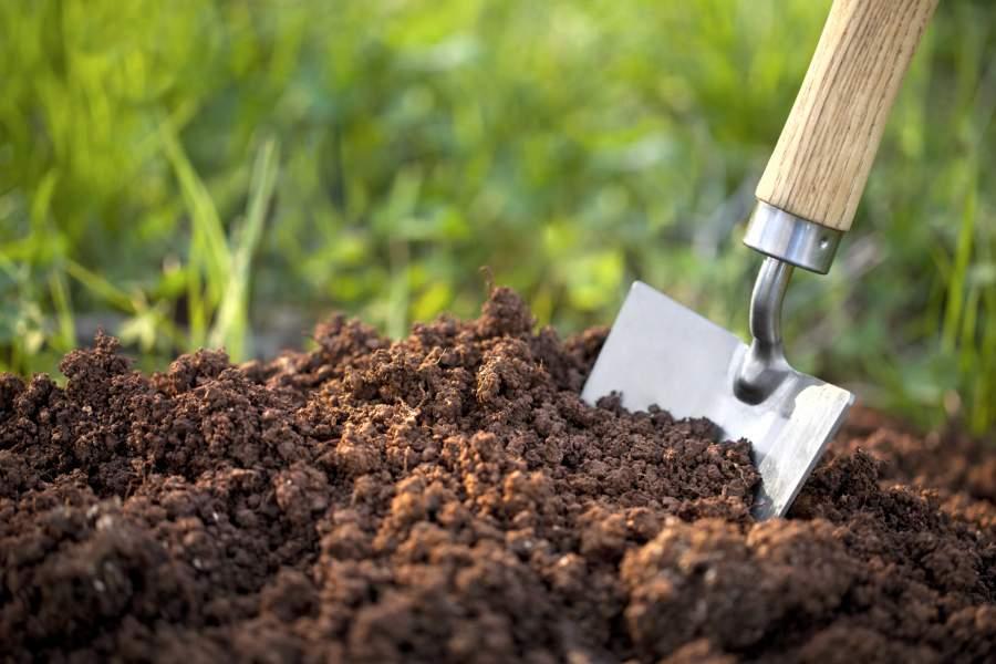 Cách xử lý đất trồng đúng tiêu chuẩn