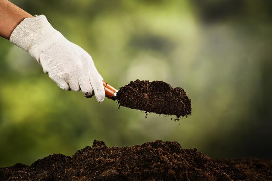 Tiến hành trộn theo tỉ lệ: 5 phần đất nền + 3 phần giá thể tạo xốp + 2 phần phân bón.
