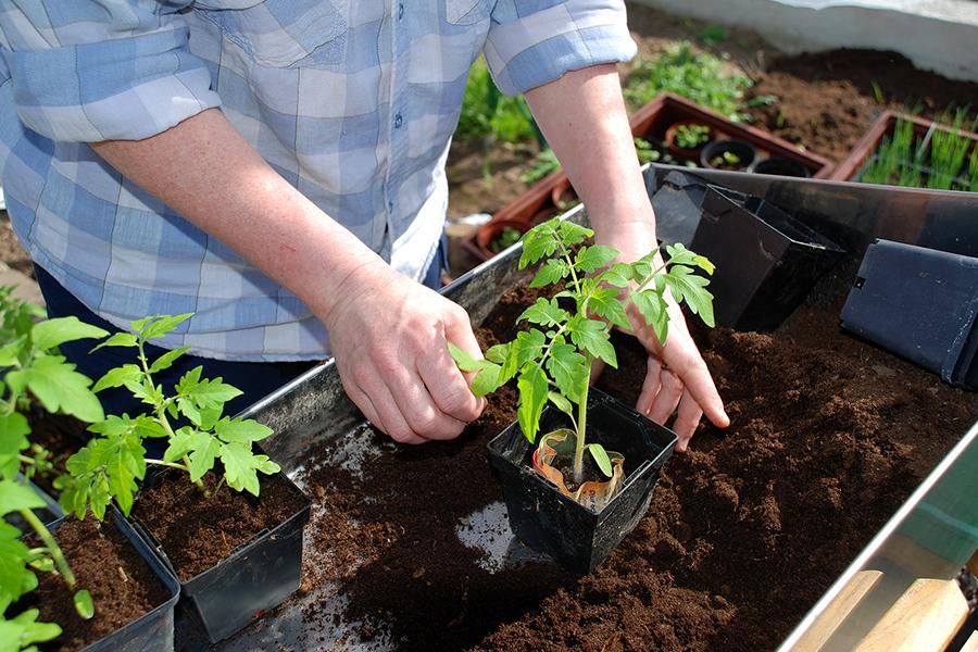 cần bổ sung thêm đất trồng rau sạch mới cung cấp dưỡng chất giúp đất trở nên tơi xốp.